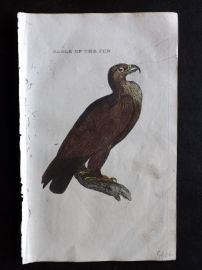 Brightly 1815 Antique Hand Col Bird Print. Eagle of the Sun
